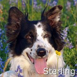 Sterling_TN.jpg