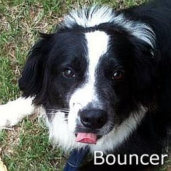Bouncer_TN.jpg