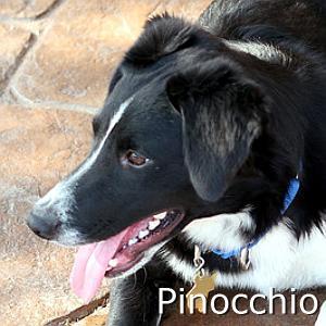 Pinocchio_TN.jpg