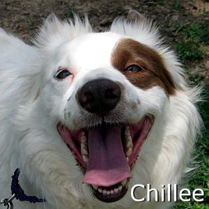 Chillee_TN.jpg