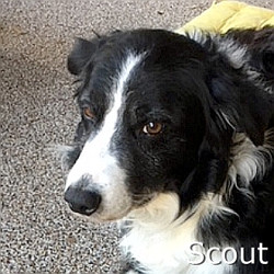 Scout_TN