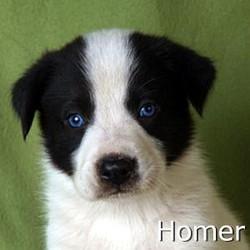 Homer_TN.jpg