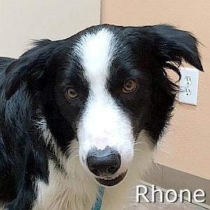 Rhone_TN.jpg