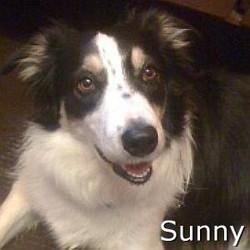 Sunny_TN.jpg
