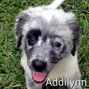 Addilynn_TN.jpg