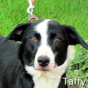 Taffy-TN.jpg
