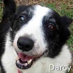 Darcy_TN.jpg