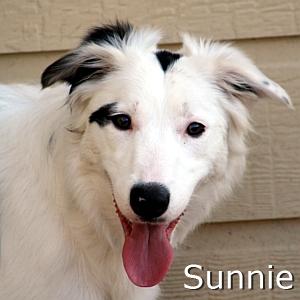Sunnie_TN.jpg