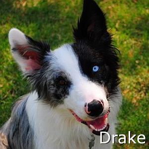 Drake_TN.jpg