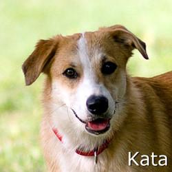 Kata-TN2