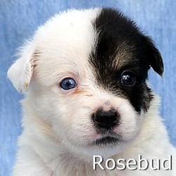 Rosebud_TN.jpg