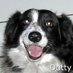Dotty_TN2.jpg