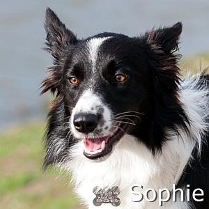 Sophie-TN