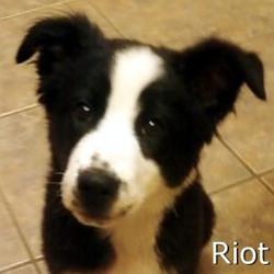Riot_TN.jpg