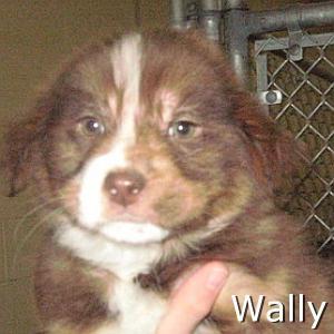 Wally_TN.jpg