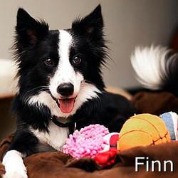 Finn_TN02.jpg