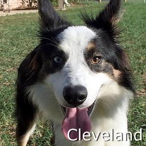 Cleveland_TN.jpg