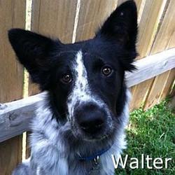 Walter_TN.jpg