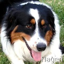 Hagen_TN_New.jpg