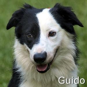 Guido-TN.jpg