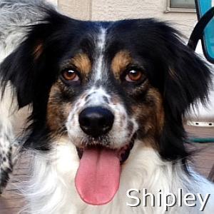 Shipley_TN.jpg