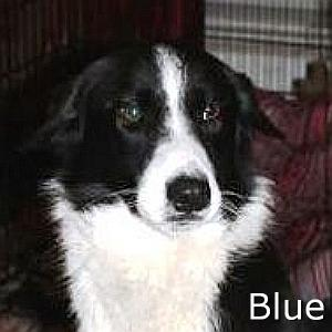 Blue_TN.jpg