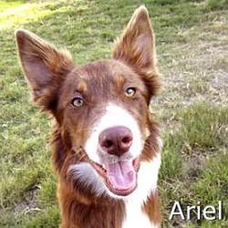 Ariel_TN.jpg