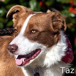 Taz_TN.jpg