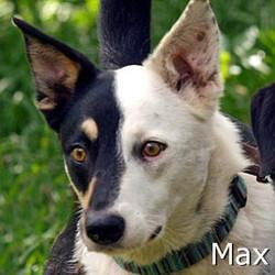 Max_TN.jpg