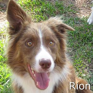 Rion_TN.jpg