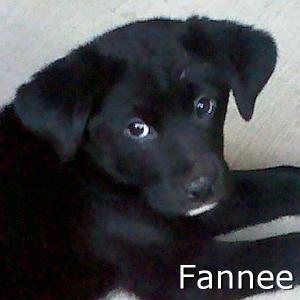 Fannee_TN.jpg