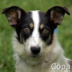 Copa_TN.jpg