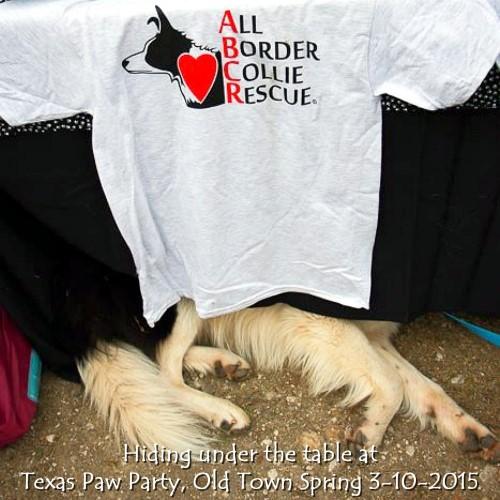 Texas Paw Party 3-10-2015 1.jpg