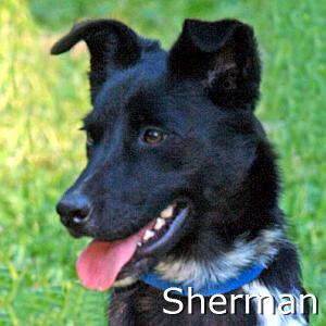 Sherman_TN_New.jpg