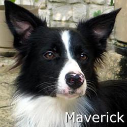 Maverick_TN.jpg