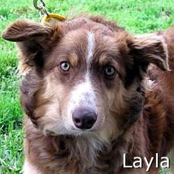 Layla_New_TN.jpg