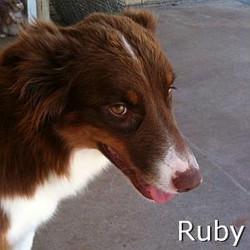 Ruby_TN.jpg