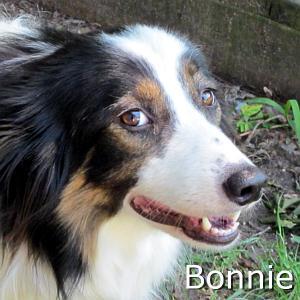 Bonnie_TN.jpg