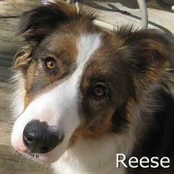 Reese_TN.jpg