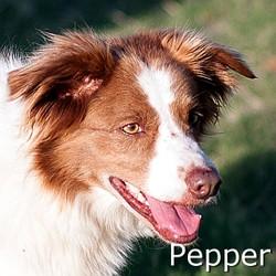Pepper_TN.jpg