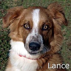 Lance_TN.jpg