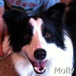 Molly2_TN.jpg