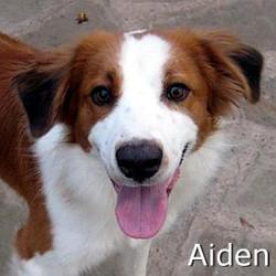 Aiden_TN.jpg