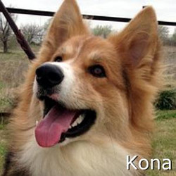 Kona_TN.jpg