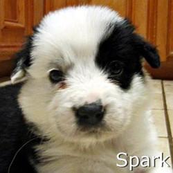 Spark_TN.jpg