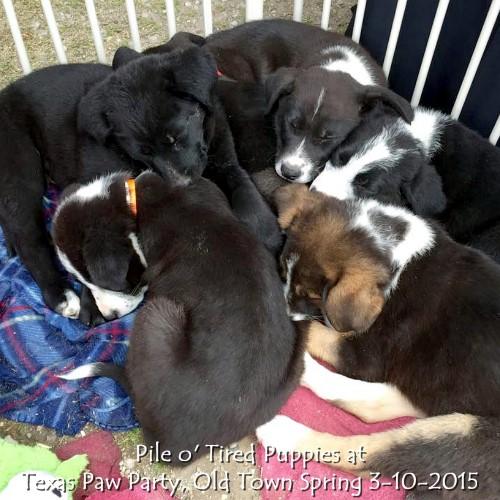 Texas Paw Party 3-10-2015 2.jpg