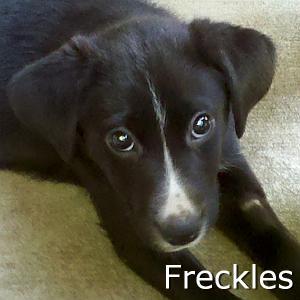 Freckles_TN.jpg
