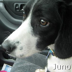 Juno_TN.jpg