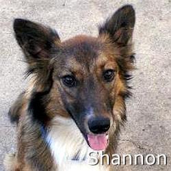 Shannon_TN.jpg