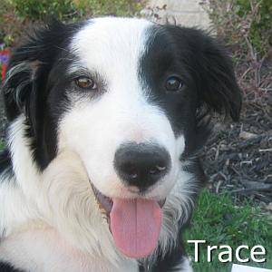 Trace_TN.jpg
